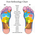 Reflexology @ Therapy Courses training school  | Alderbury | United Kingdom